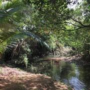 Oever van de rivier